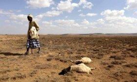 El cambio clim�tico amenaza la supervivencia de millones de africanos