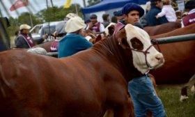 Desde este domingo, Corrientes ser� sede de la Exposici�n Nacional de Razas