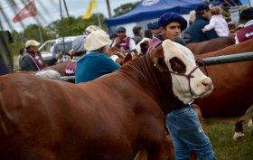 Desde este domingo, Corrientes será sede de la Exposición Nacional de Razas
